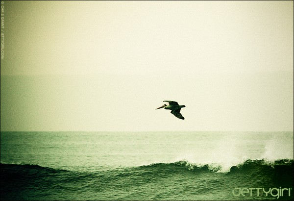 Early morning pelican flight. Photo © Chris Grant / JettyGirl.com