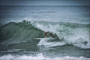 Taylor Pitz, early morning barrel. Surf photography by Chris Grant, Jettygirl Online Surf Magazine.