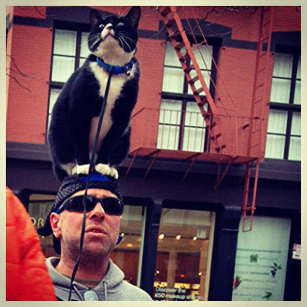 Cat on head. Friends helping friends in New York City. Project Save Our Surf.