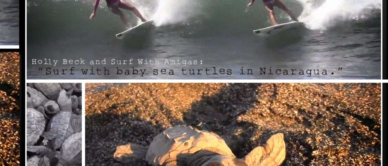 Surf with baby sea turtles in Nicaragua.